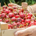 I Vermut entre cireres a Prunus (Red Flavors)